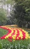 Wave of Red/Yellow