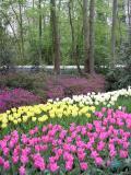 TulipScenery