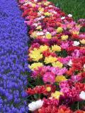 Variedflowers