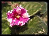 moms flower