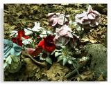 Dead Cemetery Flowers