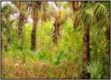 Florida Park Impressionistic.jpg