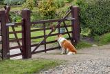 Lassie's Come Home
