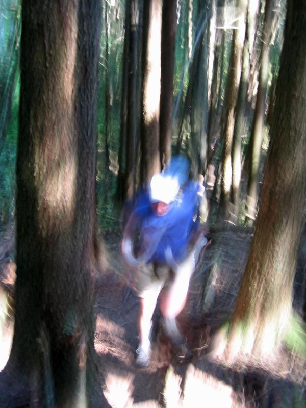 Charlie running too fast for the camera - East Tiger Trail