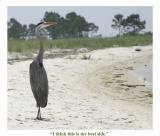 Heron Looking