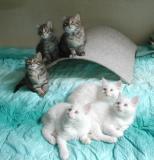 kittens010603.jpg