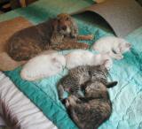 Sofi watching over the kittens