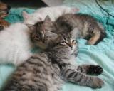 Wanda &  Hertta  napping
