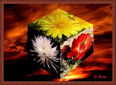 Cube Flower copy 800.jpg