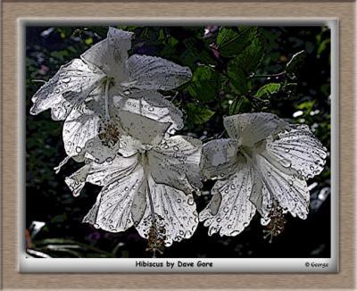 WhiteHibiscusPosterEdgesFramed.jpg