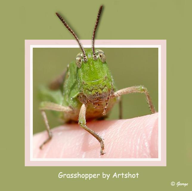 ArtShot Grasshopper Finished.jpg