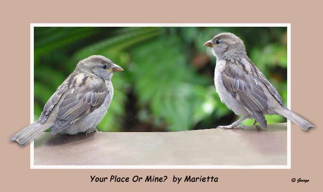 Birds Marietta Finished.jpg