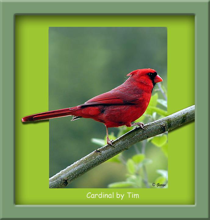 Cardinal 01 Framed.jpg