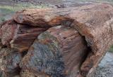 Petrified Log & Bark