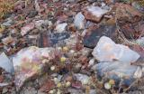 Shards of Petrified Wood Agate