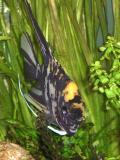 My fish tank.