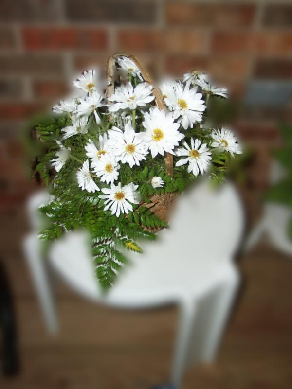 Daisys w blur