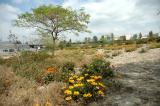 Wild flower fields/91 Freeway Exit
