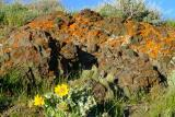 Pocatello spring scene DSCF0094.JPG