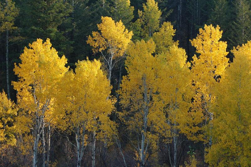 autumn DSC_0029.jpg