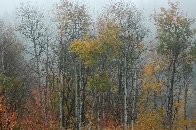 Foggy Autumn Scene DSC_0005.jpg