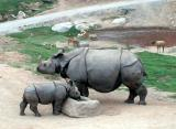 Moma and baby rhino - Taken at the San Diego Wild Animal Park in Escondido, CA