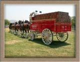 Clydesdales at the Temecula Balloon and wine Festival 2003