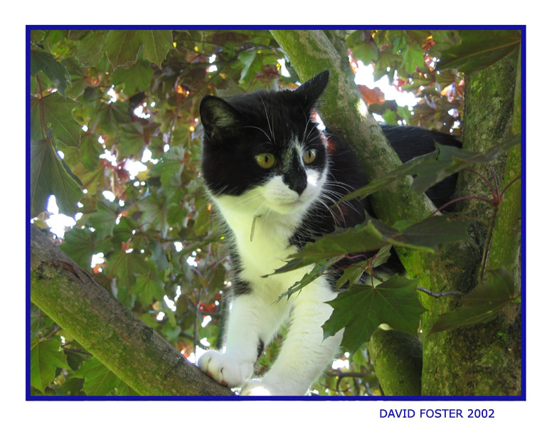 marty in tree