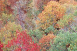 Fall color below Mather Lodge Scan697.jpg