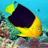 Diving Bonaire Snapshots 2001