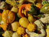 gourds at a pumpkin patch