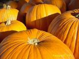 fall pumpkins at Ridgemar Farmer's Market