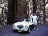Dan in Redwood Forest
