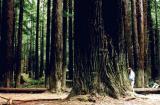 Dan waters Redwood
