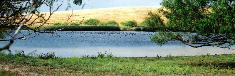 DucksOnThePond - Fall, 2001.