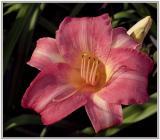 flowers @ friends & parks