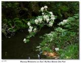 070403 Big Basin Redwoods State Park
