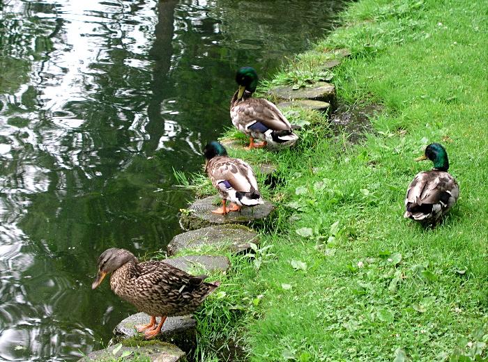 Duckfest - II