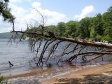 Dead-pine-in-lake.jpg