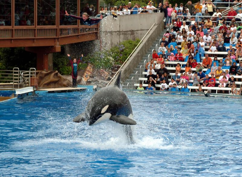 Orca Acrobat