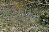 WildflowersII033003-002PSE.jpg