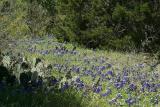 WildflowersII033003-008PSE.jpg