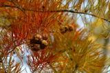 Cypress_0421.jpg