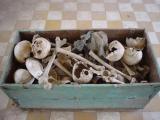 bones being catalogued at Tuol Sleng Museum (Phnom Penh)