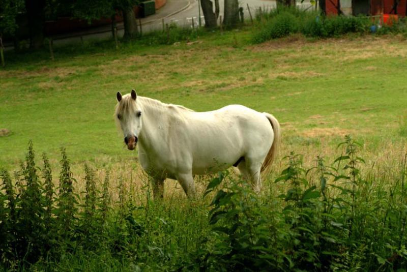 Our new neighbour (Tamron 90 test)