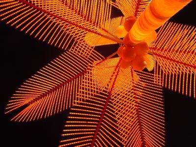 Neon Palm at Night