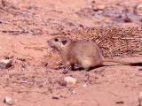 038 Desert Occupant.jpg