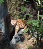 Linda exploring the beloved nature again!