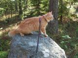 Linda on päässyt taas ihastelemaan metsää!