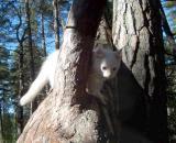 Look, where I climbed!